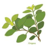 Clipart of Sweet Marjoram Herb k8458473.