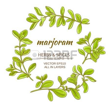 376 Marjoram Cliparts, Stock Vector And Royalty Free Marjoram.