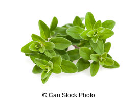 Marjoram Stock Photos and Images. 3,925 Marjoram pictures and.