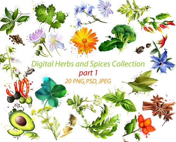 Digital Herbs and Spices Collection ~ Illustrations on Creative Market.