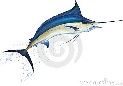 Marlin Stock Illustrations.