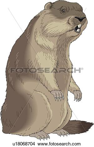 Clipart of Marmot u18068704.