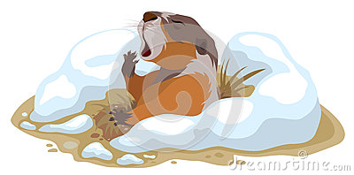 Marmot Stock Illustrations.