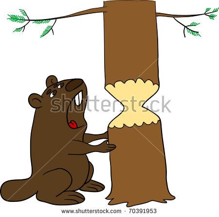 Industrious Beaver Stock Photos, Royalty.