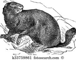 Marmota Clipart Vector Graphics. 10 marmota EPS clip art vector.