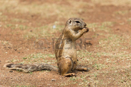 African Ground Stock Photos & Pictures. Royalty Free African.