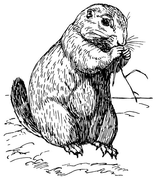 Prairie Dog Clipart.