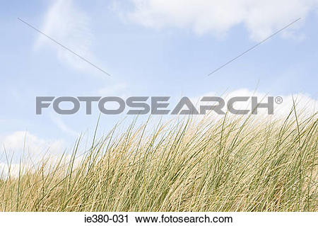 Stock Photography of Marram grass and sky ie380.