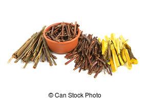 Stock Images of Dry Marsh Cinquefoil, Potentilla palustris. Dry.
