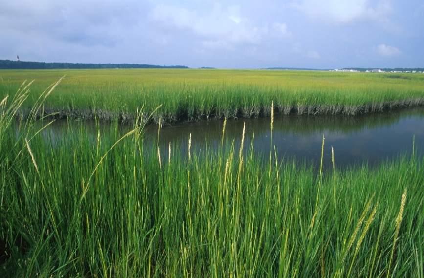 Marsh clipart.