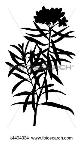 Clipart of vector illustration of the marsh plant on white.