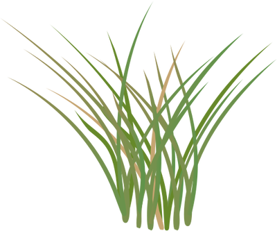 Marsh Grass Clip Art.