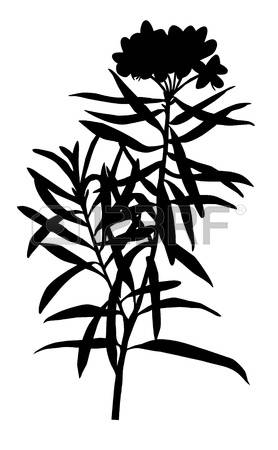 894 Marsh Plant Cliparts, Stock Vector And Royalty Free Marsh.