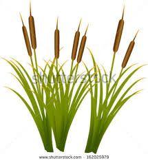 Marsh Plant Clipart.