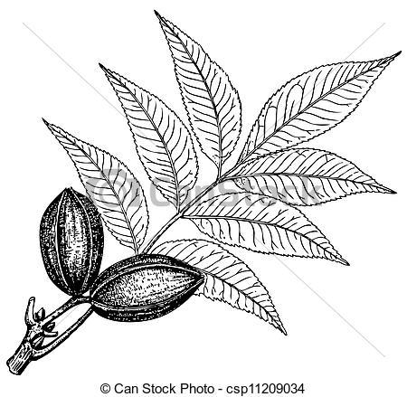 Marsh plant Vector Clipart EPS Images. 208 Marsh plant clip art.