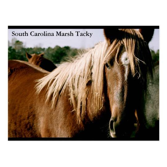 South Carolina Marsh Tacky Postcard.