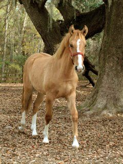 1000+ ideas about Types Of Horses on Pinterest.