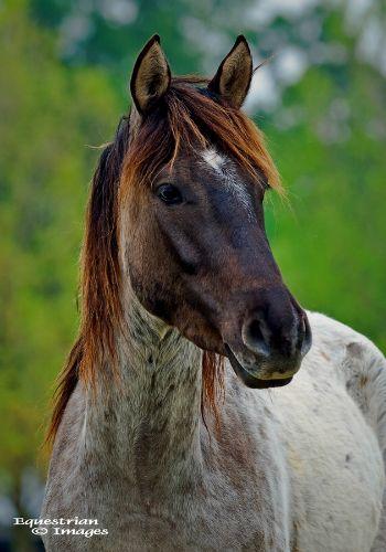 1000+ ideas about Horse Markings on Pinterest.