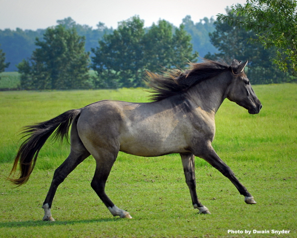 1000+ images about Unusual horse breeds on Pinterest.