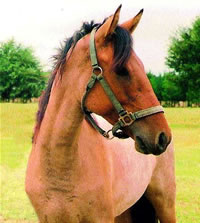 10 Rarest Horse Breeds.