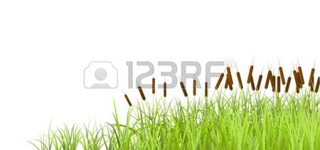 1,307 Marshes Stock Illustrations, Cliparts And Royalty Free.