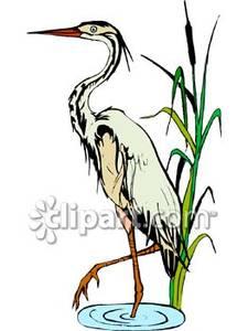 Crane In A Marsh.