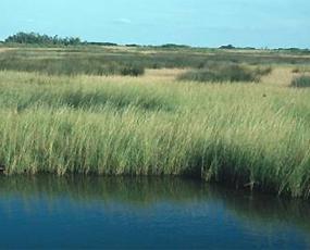 Wetlands and Coastal Erosion.