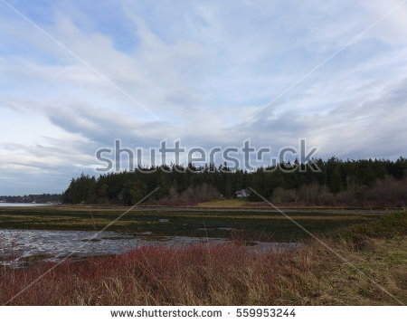 Marshland Stock Photos, Royalty.