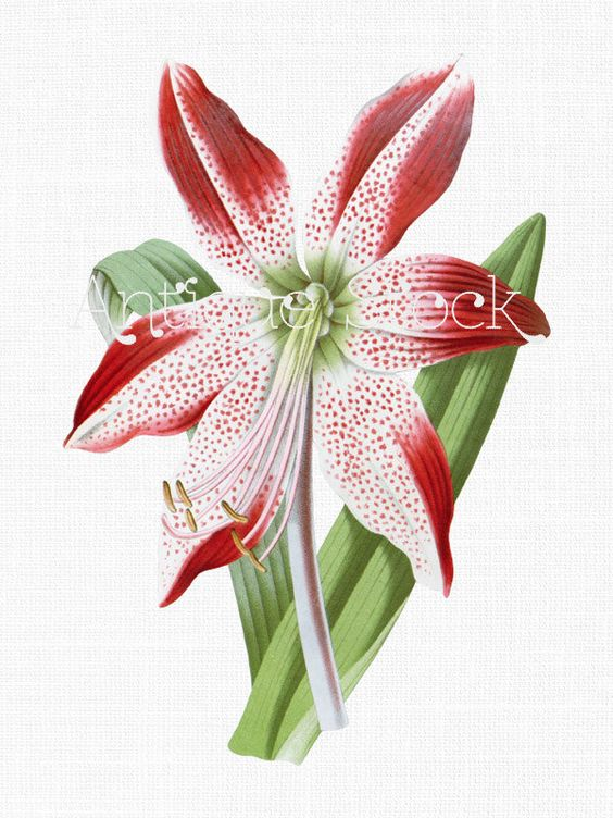 Flower clipart, Barbados and Collage wall art on Pinterest.