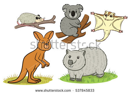 Marsupial Stock Images, Royalty.