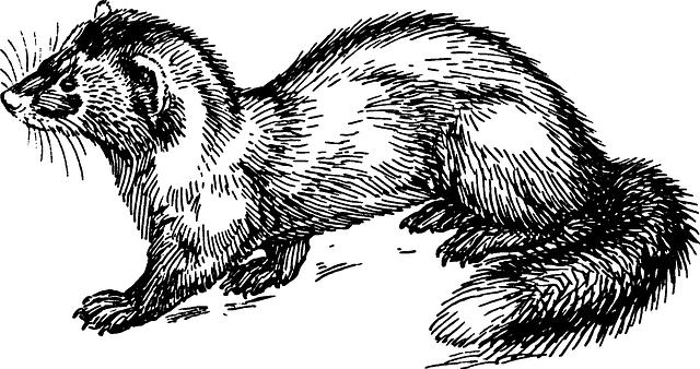 Free vector graphic: Marten, Animal, Biology, Mammal.