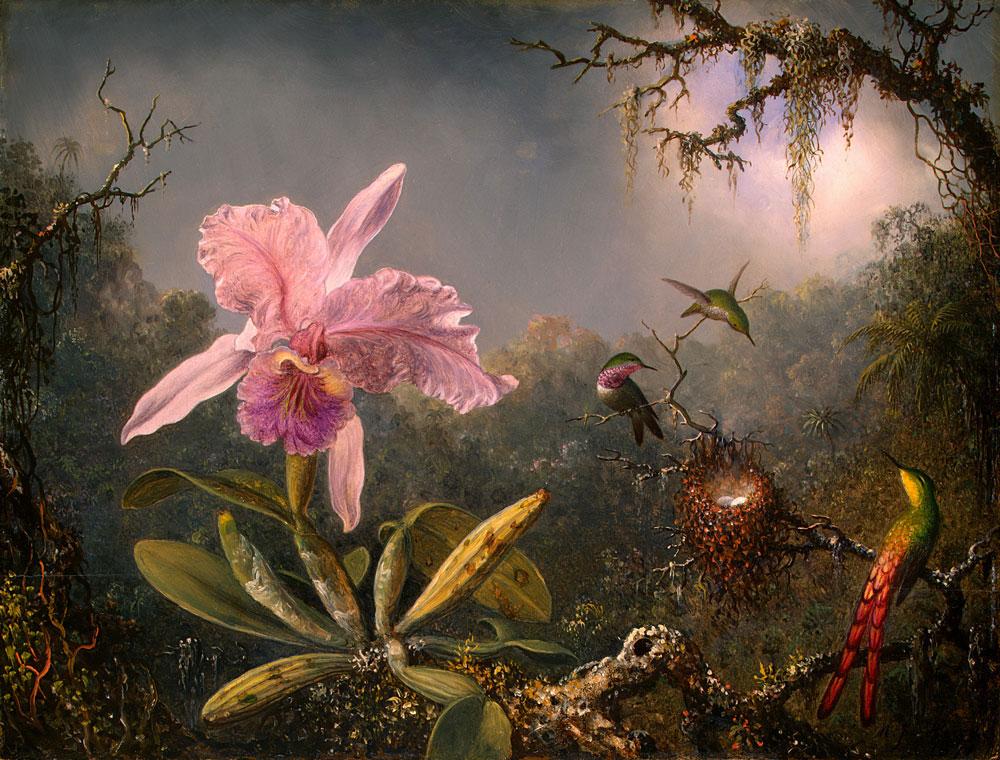 Cattleya Orchid and Three Hummingbirds.