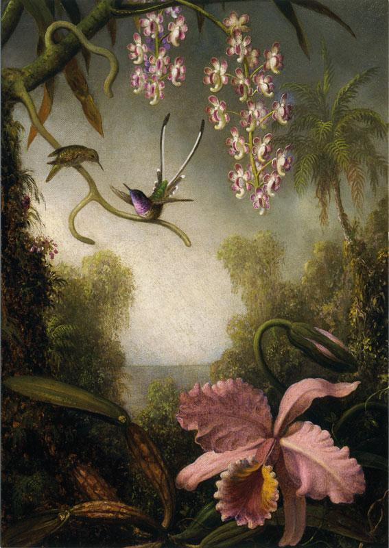 1000+ images about Orchids and strange flowers on Pinterest.