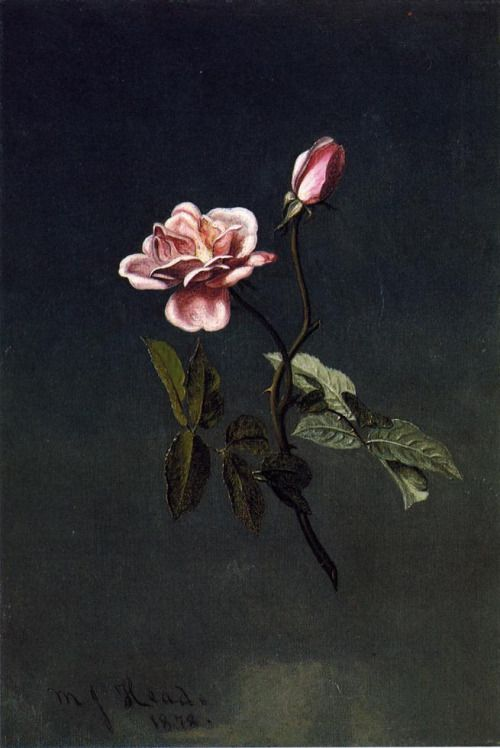1000+ images about Still life on Pinterest.