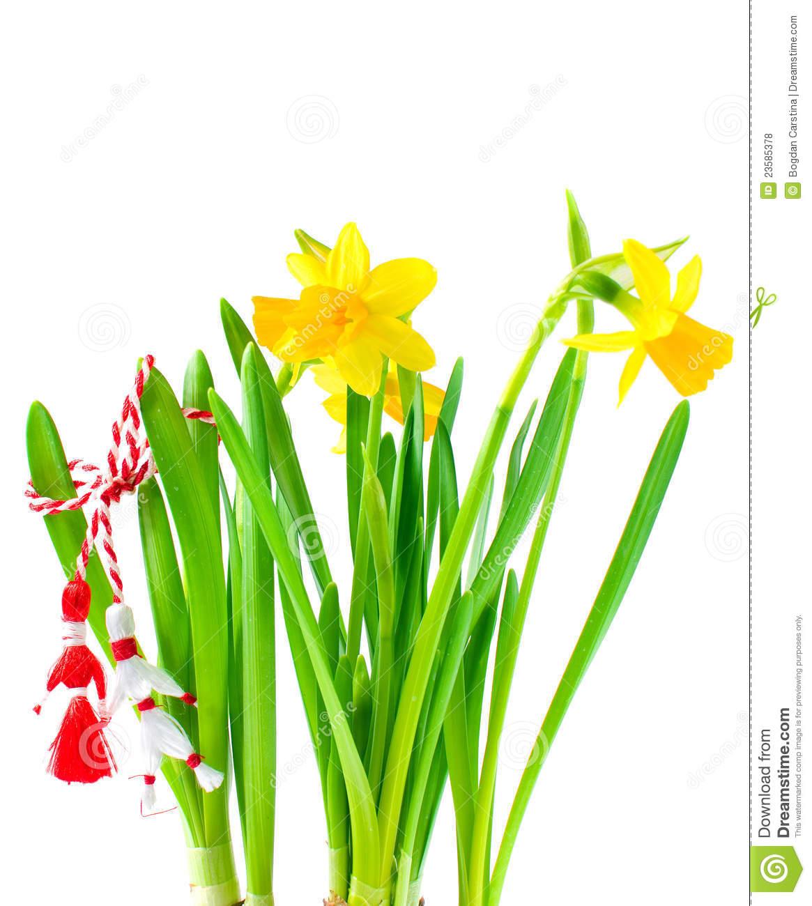 Martisor Daffodils.