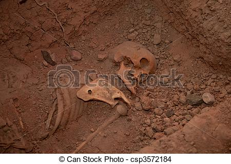 Stock Photo of Skeleton In Mass Grave, Museum in Ayacucho, Peru.