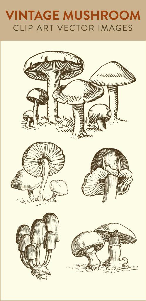 1000+ ideas about Mushroom Tattoos on Pinterest.