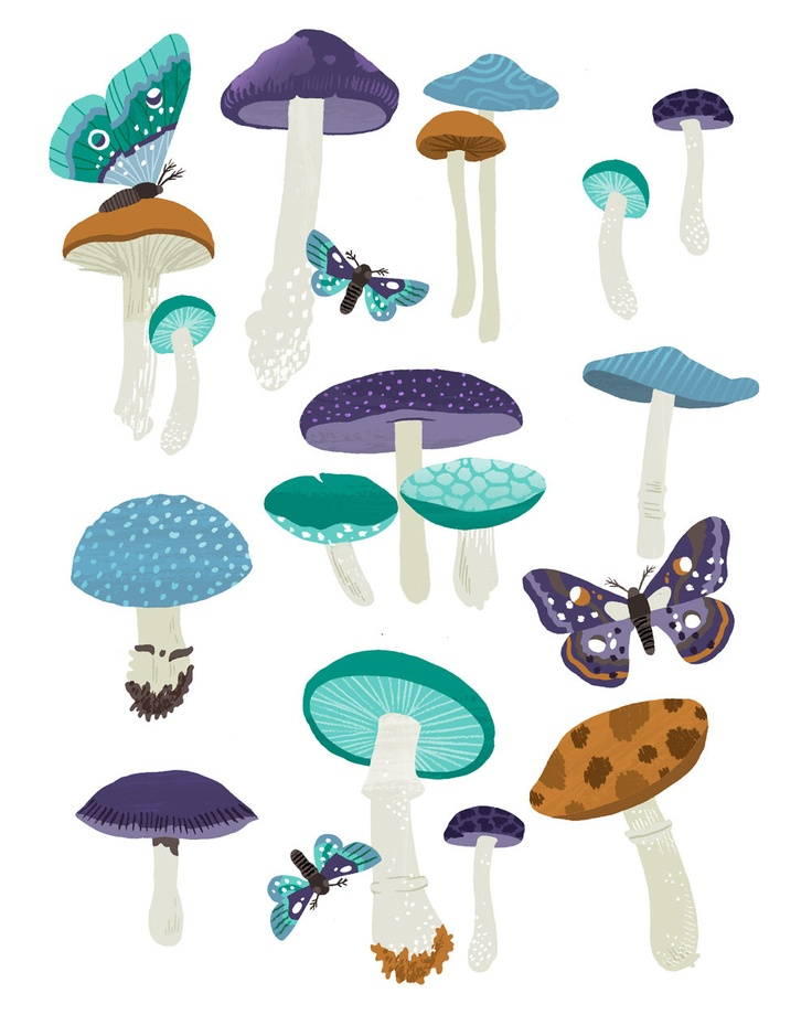 1000+ ideas about Mushroom Identification on Pinterest.