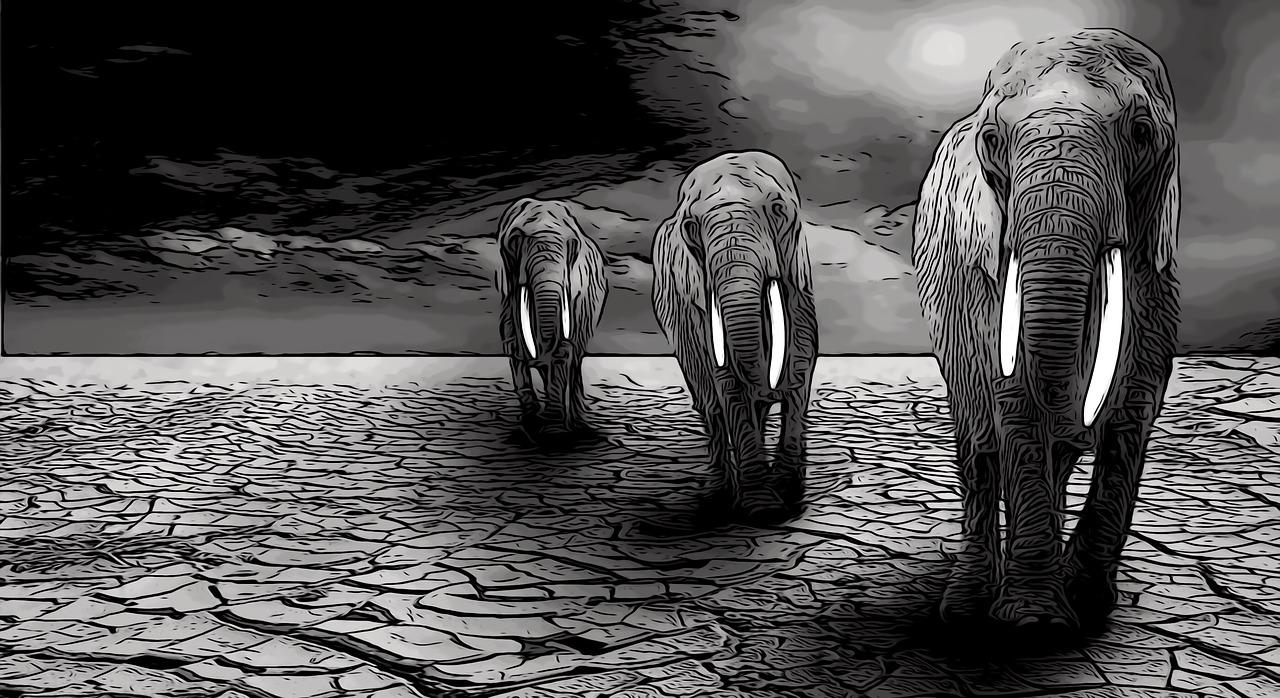 Elephant,wild,animal,nature,travel.