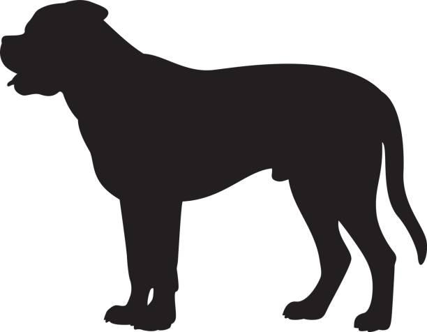 Bull Mastiff Illustrations, Royalty.