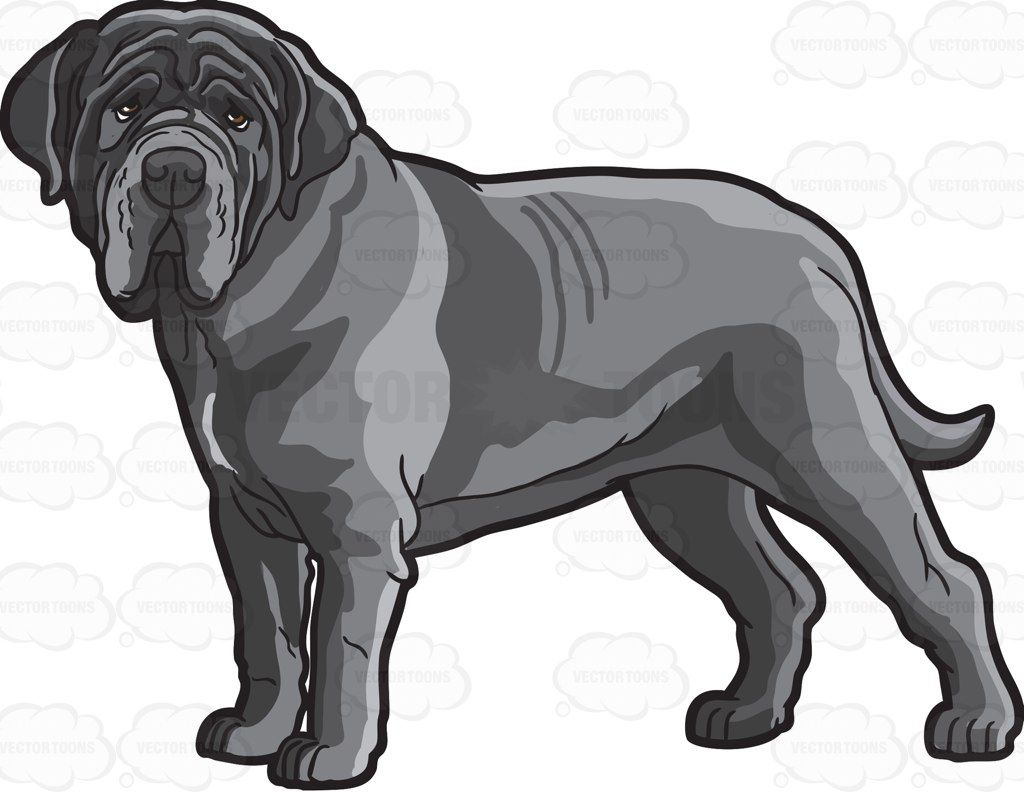 A Neapolitan Mastiff #cartoon #clipart #vector #vectortoons.
