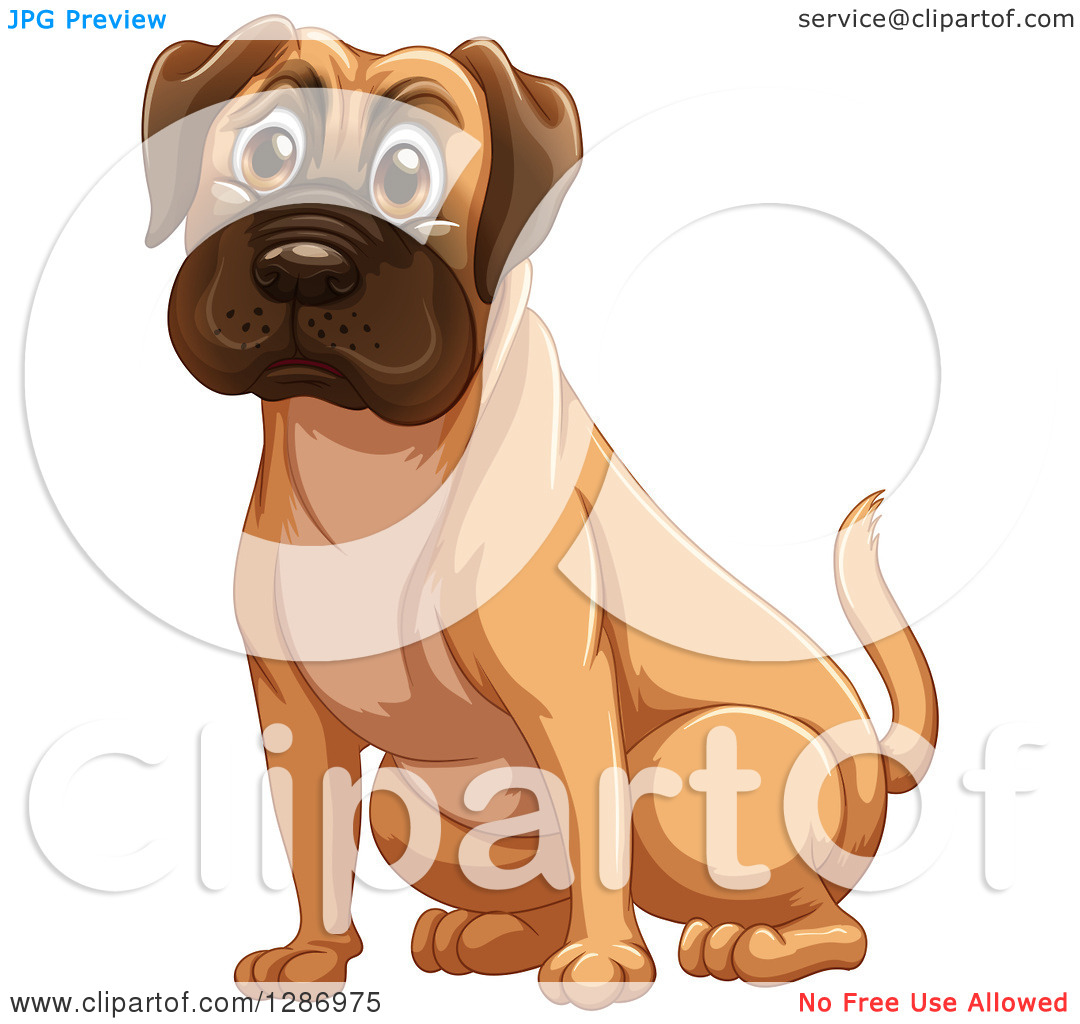 Clipart of a Fawn Boxer or Mastiff Dog Sitting.