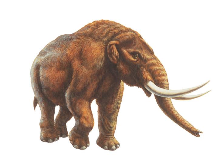 Mastodon Facts, Habitat, Pictures and Diet.