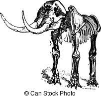 Mastodon Stock Illustrations. 67 Mastodon clip art images and.