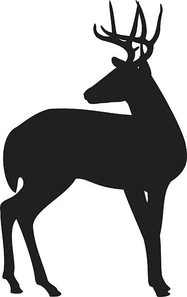 Deer Mating Call Clip Art, Vector Images & Illustrations.