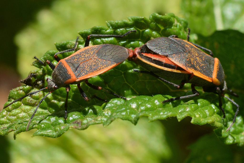 The World's Best Photos of heteroptera and largidae.
