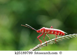 Heteroptera Stock Photos and Images. 1,003 heteroptera pictures.