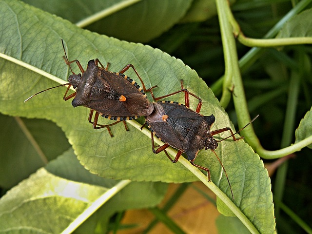 Free pictures MATING.
