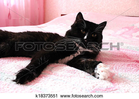 Stock Photography of black cat lying prone on the matrimonial bed.