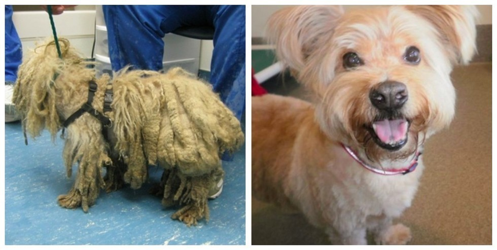 Your Dog's Matted Hair Isn't Just Uncomfortable, It's Dangerous.